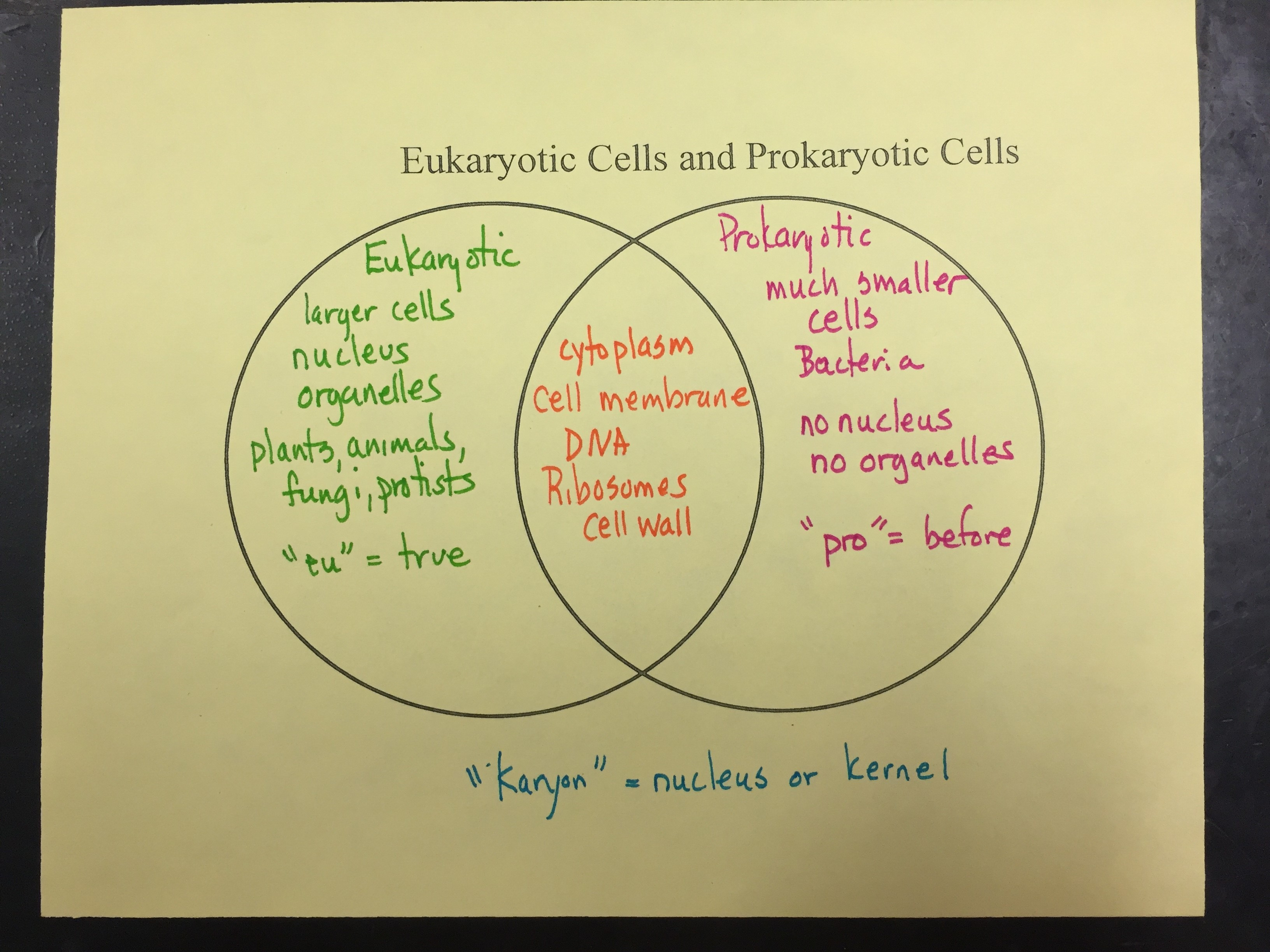 Eukaryotic Plant Cell Diagram Diagram Of A Eukaryotic Cell